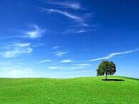 ambiente_prato_albero--400x300